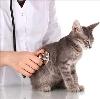 Ветеринарные клиники в Таловой